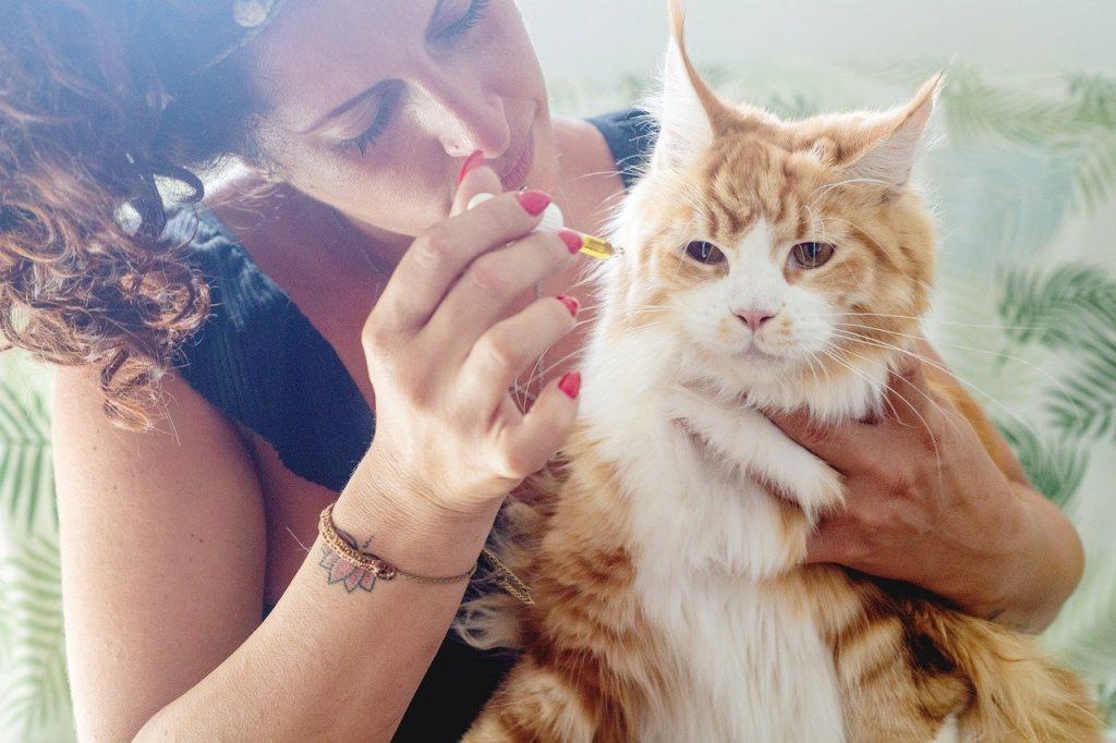cat, feline, pet-5484139.jpg