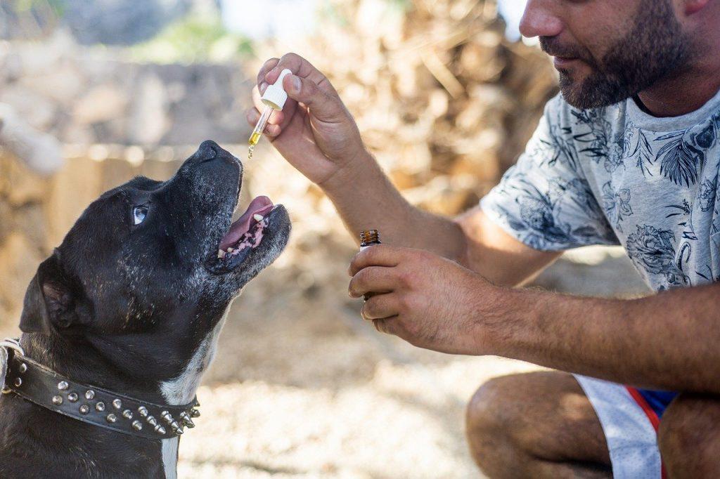 cbd oil dogs, cbd oil pets, hemp oil dog-5441150.jpg